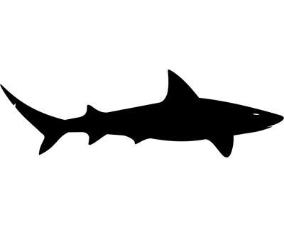 Startseite » Wandtattoo » Tiere » Meeresbewohner » Wandtattoo Hai